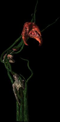 200px-Bestiary_Echinops_full.png