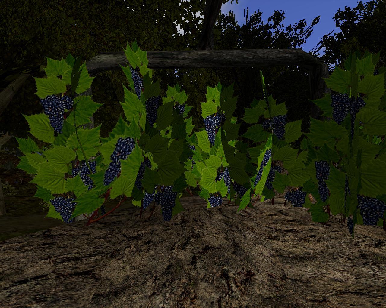 виноград-скрин.jpg