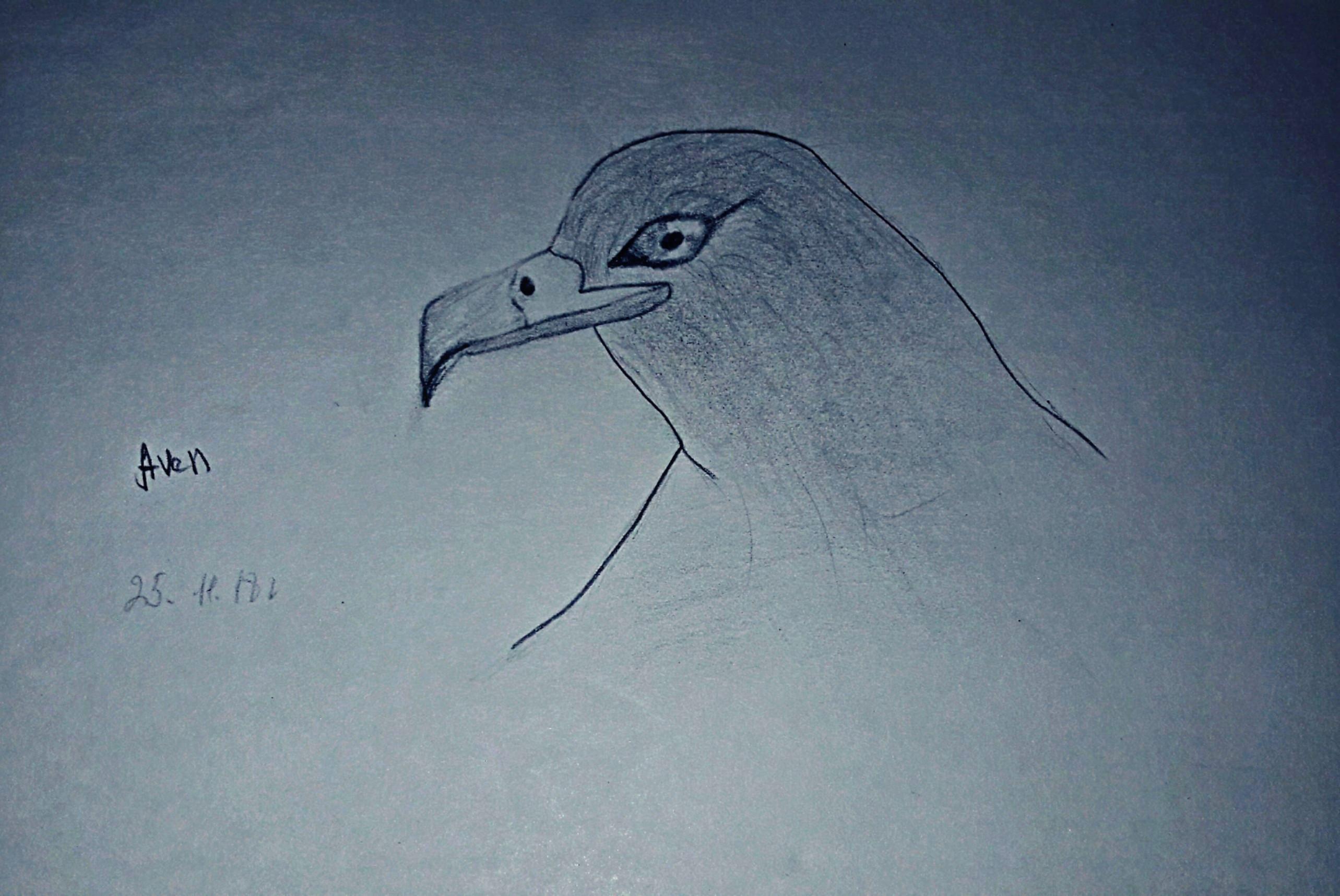 Not Eagle.jpg