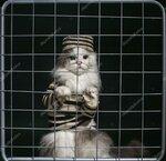 depositphotos_59844027-stock-photo-cat-criminal-behind-bars.jpg